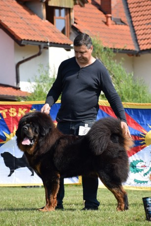 10 Kaluga Timas Super dog Gregory